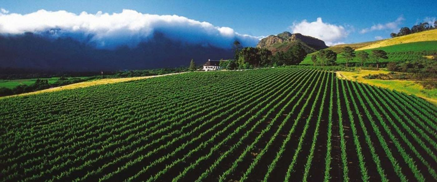 Mont Rochelle Estate Franschhoek with its neat dark green vineyard rows against a cloud covered mountain